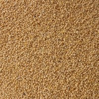 Foxtail-Millet-Suppliers-in-Chennai
